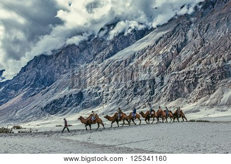 HUNDER, INDIA - SEPTEMBER 11, 2012: Tourists riding camels in Nubra valley in Himalayas, Ladakh
