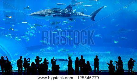 Oceanarium in Okinawa