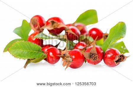 beautiful rosehip twigs with leaves and red ripe berries or dog-rose shipovnik briar is isolated on a white background close up