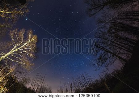 The Starry Sky From Woodland, Ultra Wide Fisheye View