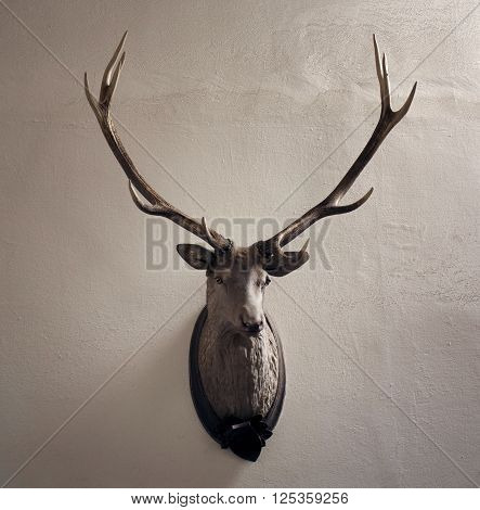 Mounted head of deer. Stuffed stag with monumental antlers. Hunting antique trophy. Taxidermy of deer´s head hung on white wall.