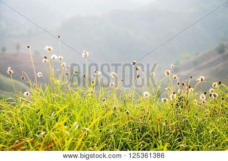 Mountains Meadow And Flower Spring Season In Floral Natual