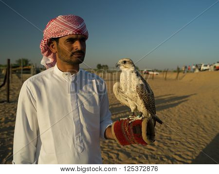 NOV 30 -DUBAI UAE: bedouin Arab with a tame falcon posing for the tourists on the 30 of november 2013 in Dubai,UAE
