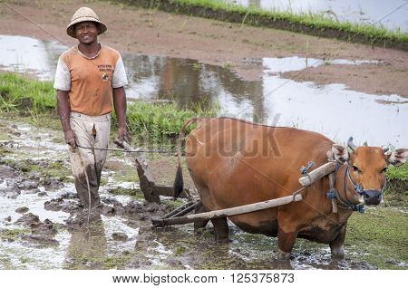 Earth international day - April 22 2016. Environment polution. Traditional farmer with bullock cart