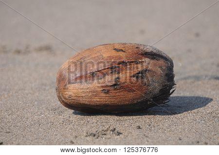 trash discarded coconut on the sand beach