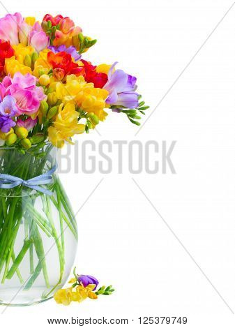 Posy of fresh freesia flowers in glass vase close up  isolated on white background