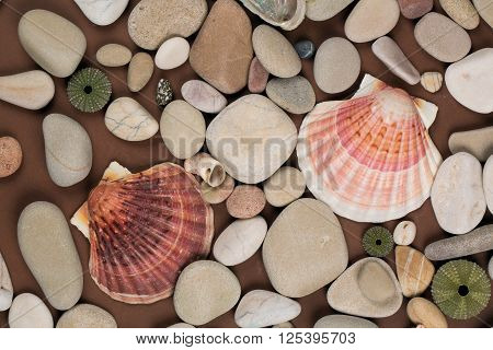 sea shells and variety of pebbles background