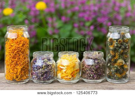 herbs and flower petals in glass jars on the background of blossoming spring plants. with space for text. the concept of aromatherapy homeopathy alternative medicine