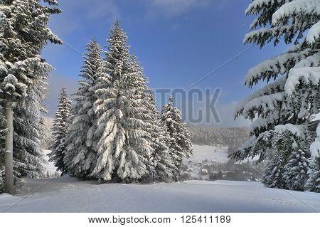?nieg na drzewach w zimowy, mro?ny poranek, Kamianna, Polska