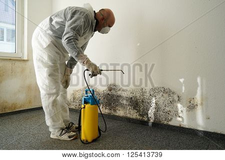specialist in combating mold in a apartment poster