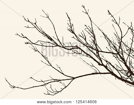 Vector image of the tree branches in the cold season.