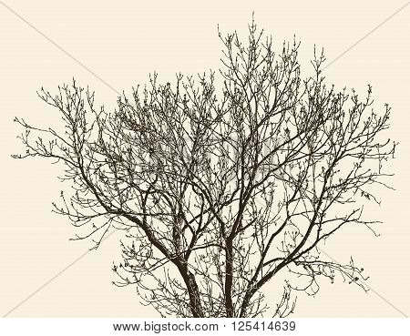 Vector image of a young tree in the spring.