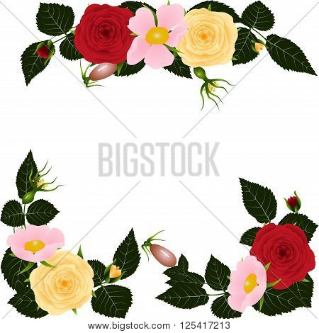 Dogrose and roses leaves isolated on white background. Spring or summer design for background  or invitation, wedding or greeting cards, isolated on white background, vector illustration