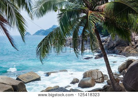 Kalim beach in Phuket with rocks sea and coconut palms