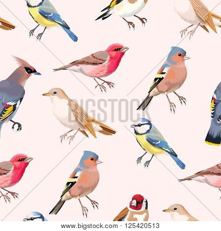 Vintage colorful beautiful songbirds vector seamless background