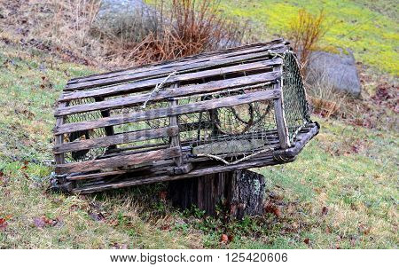 Old, Weathered, Wooden Lobster Trap; placed on tree stump.