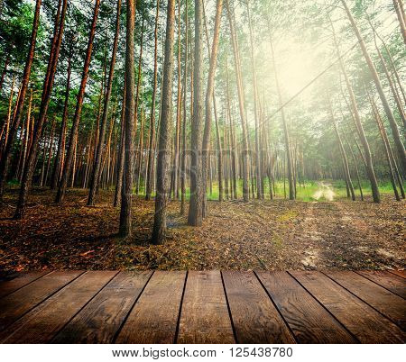 Beautiful sunlight in the spring pine forest with wood planks floor interior background