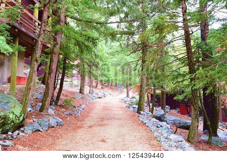 Rural narrow road thru a rustic neighborhood in a pine forest