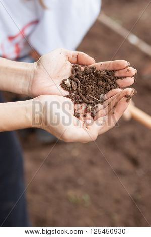 Two hands holding earthworm and brown soil
