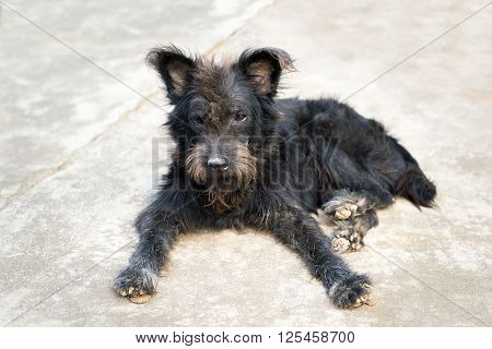 stray dog or homeless dog abandoned on the streets