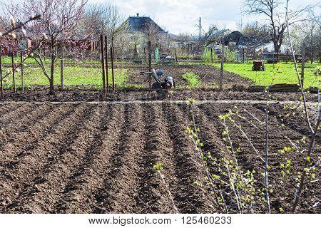 Plowed Vegetable Beds And Tiller In Village
