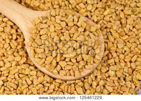 Fenugreek seeds in wooden spoon as food background
