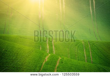 Sunny green wavy grass  field suitable for backgrounds or wallpapers, natural seasonal landscape. Southern Moravia, Czech republic