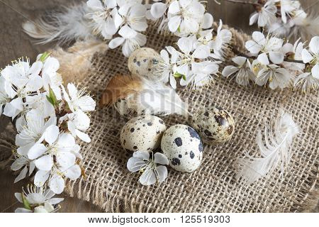 Quail Eggs, Flowers And Feather