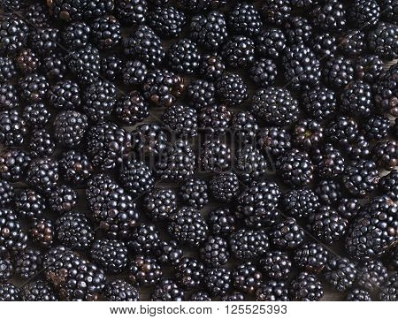 Blackberries background. Close up top view high resolution product. Harvest Concept