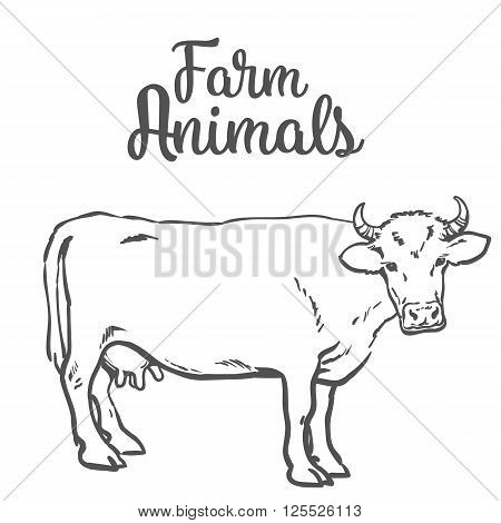 Vector sketch of a cow on a white background one isolated hoofed animal, farm cattle. Domestic cattle, linear illustration of a horned cow and dairy,