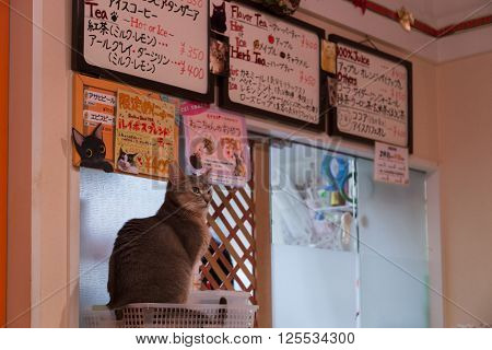 Tokyo, Japan - December 19, 2014: Cats sitting at a counter in a japanese cat cafe.