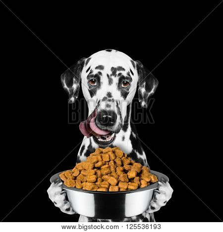 dog is hungry and keeps the food -- isolated on black background