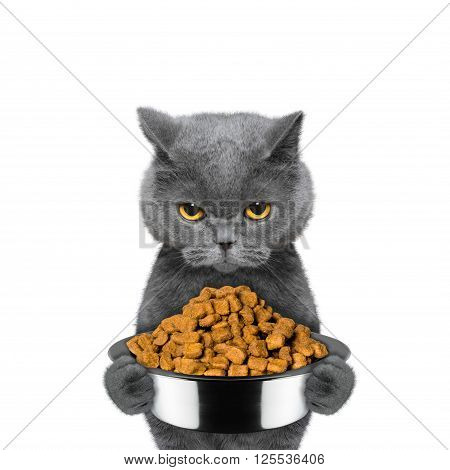 cat is hungry and keeps the food -- isolated on white background
