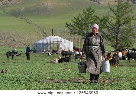 Bat-ulzii, Mongolia, July 15, 2013 : Women Organize The Milking Of The Yaks And The Goats In The Ste