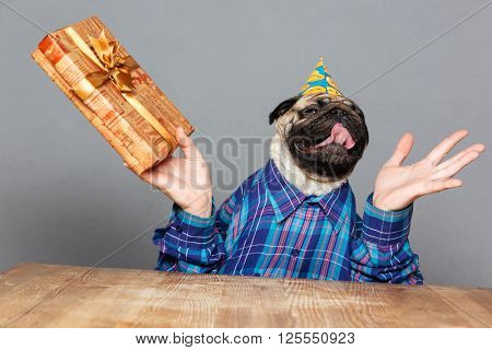 Excited happy pug dog with man hands in checkered shirt and birthday hat with gift over grey background