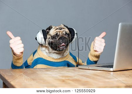 Funny pug dog with man hands in striped sweater in headphones with laptop showing thumbs up over grey background