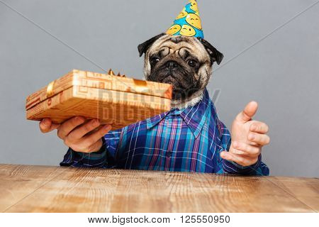 Surprised man with pug dog head in birthday hat holding present box over grey background