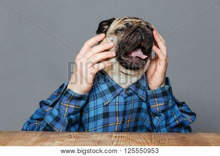 Desperate sad pug dog with man hands in checkered shirt sitting and crying over grey background