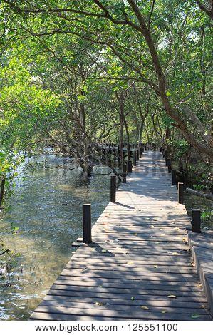 sunlight boardwalk wooden path in mangrove forest