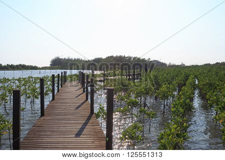 The forest mangrove with wooden walkway bridge ** Note: Shallow depth of field