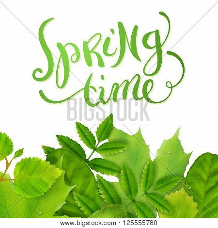 Spring time background with fresh green leaves