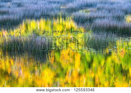Vivid Colors of Fall Leaves Reflected in Pond
