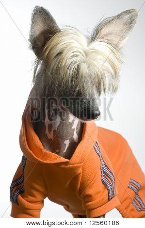 Sporty Dog