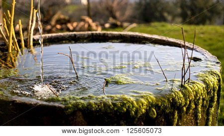 A trickle of water falls into a round tub of old mossy stone.