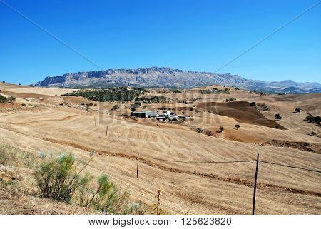 View across wheat fields towards El Torcal mountains Almogia Costa del Sol Malaga Province Andalucia Spain Western Europe.