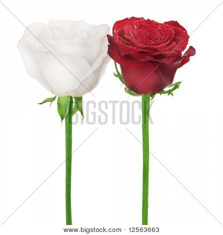 Couple of Roses:White & Red