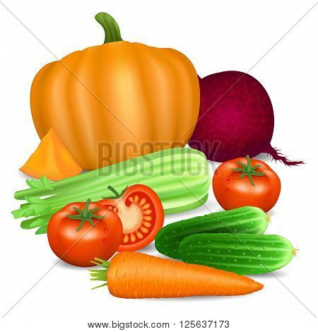 Set of vegetables. Tomato carrot pumpkin cucumber celery and beets. Natural bio vegetable healthy organic food. Realistic vector illustration