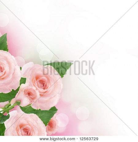 Beautiful Roses Border