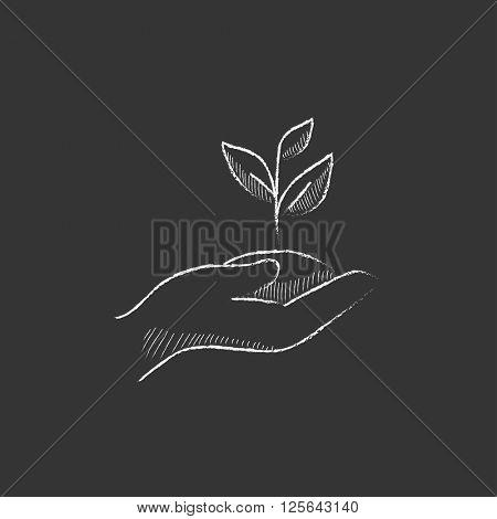 Hands holding seedling in soil. Drawn in chalk icon.