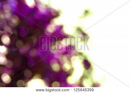 Abstract lilak background with natural bokeh color